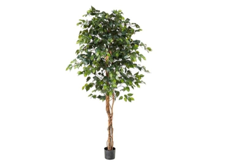 Natural looking artificial Ficus 6ft trees